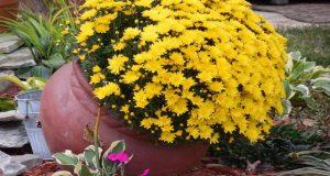 цвете според зодията