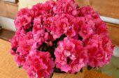 съвети за стайни цветя