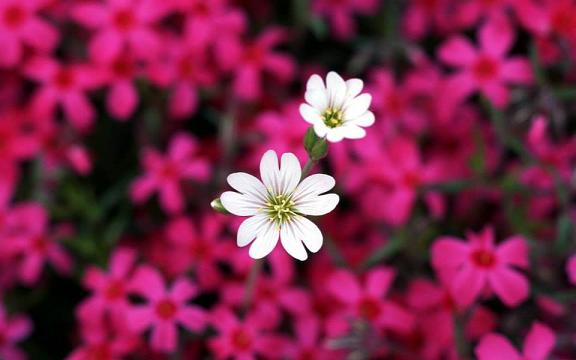 cvetya za rojdenik