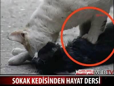 Безценен урок за живота, даден от една улична котка!