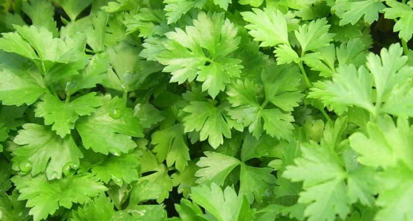 Как да си направим билково олио за салати?
