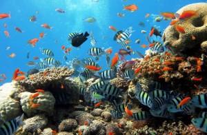 Червено море гмуркане