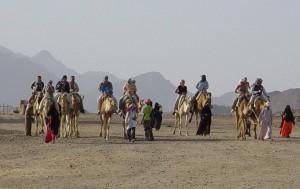 Сахара камили