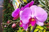 орхидея поливане