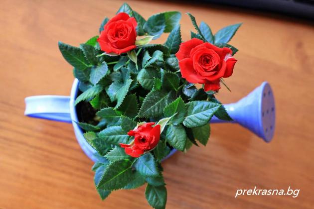 цветя пресаждане
