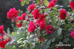 Какви цветя трябва да отглежда всяка зодия?
