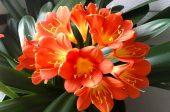 стайните цветя