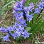 пролет зодии